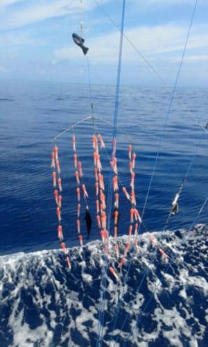 Quepos Offshore Fishing: ait