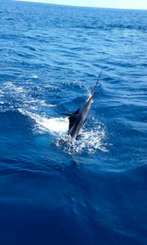Quepos Offshore Fishing: sailfish-reeled-in