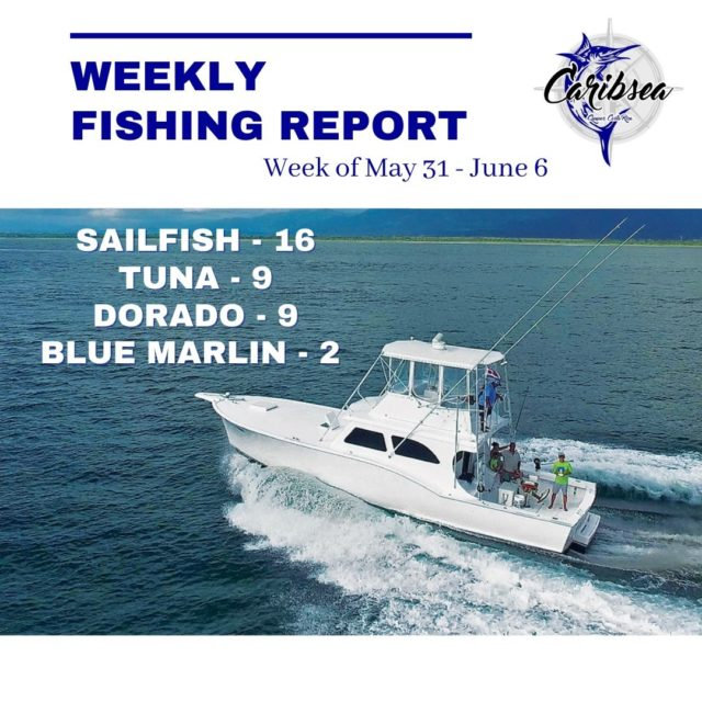 There's a lot of good fishing happening right now out of Quepos! 🎣  Join us on Caribsea by sending us a message or emailing reservations@caribseasportfishing.com to book a trip. 🤙  #fishingreport #caribseasportfishing #costaricasportfishing #quepos #marinapezvela