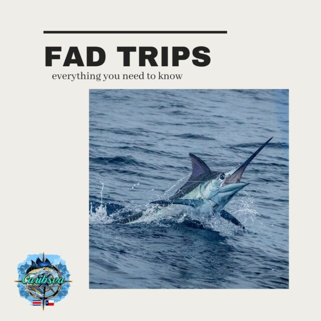 """With FAD """"season"""" in full swing, we wanted to provide you with all of the information you'd need if you're trying to cross this adventure off your bucket list. 🎣  We only have a few FAD trip spots open for the remainder of the high season... be sure to snag them while you can. 🤙  👉 caribseasportfishing.com 📧 reservations@caribseasportfishing.com 📲 833-427-2732  #caribseasportfishing #marinapezvela #fadfishing #fadfishingcostarica  #costarica #fishingcostarica #fishingtrip #fishingvacation #sportfishing #offshorefishing #saltwaterfishing #puravida"""